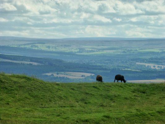 Un paysage depuis le Hadrian's wall path
