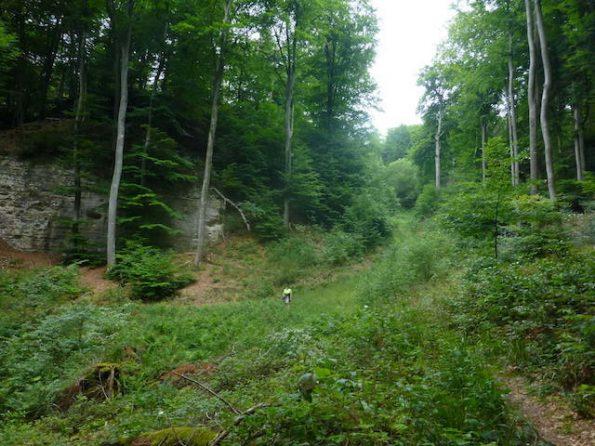 Un paysage forestier montrant la grandeur de l'environnement