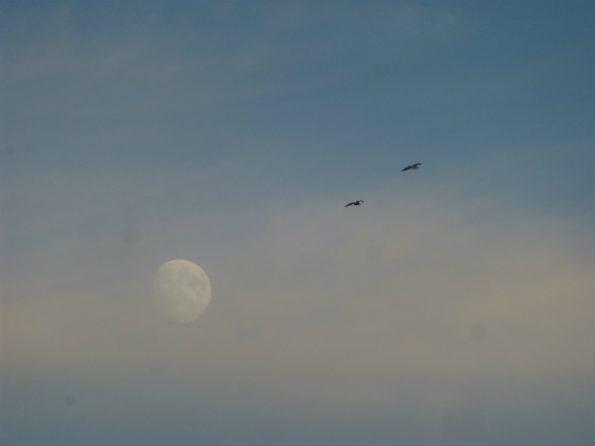 Des goélands volent, la lune en arrière-plan