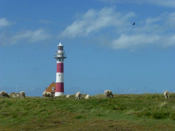Le phare de Nieuwpoort, rouge et blanc, avec des moutons à son pied