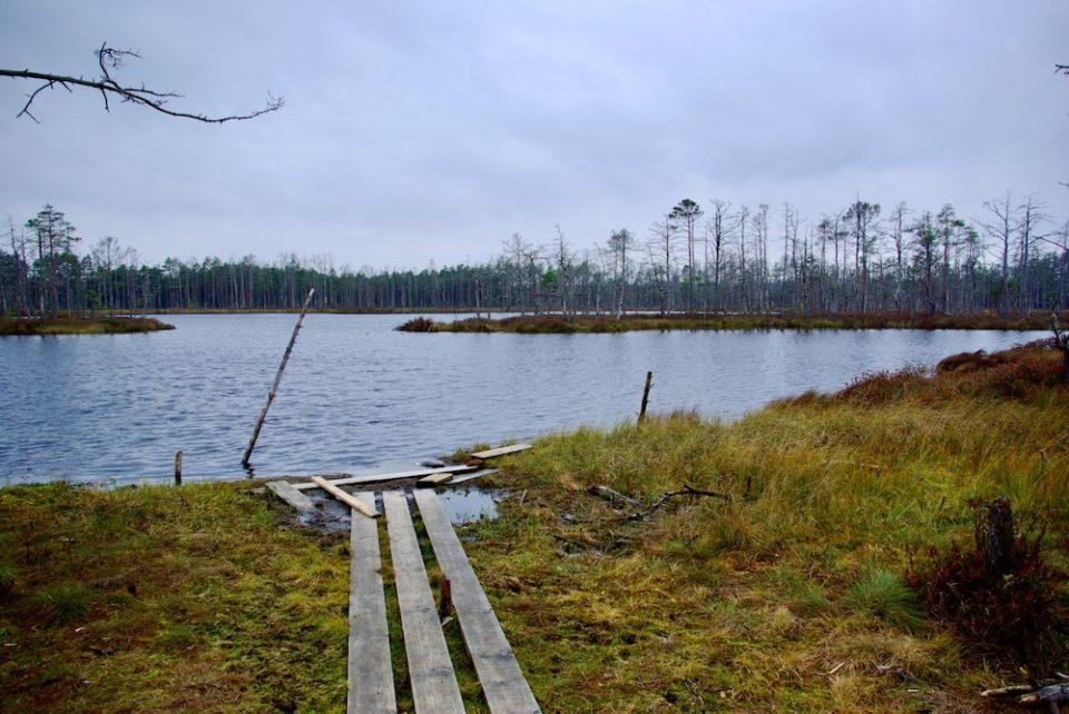 Le lac Skaista dans le marais de Cena en Lettonie © Clara Delcroix