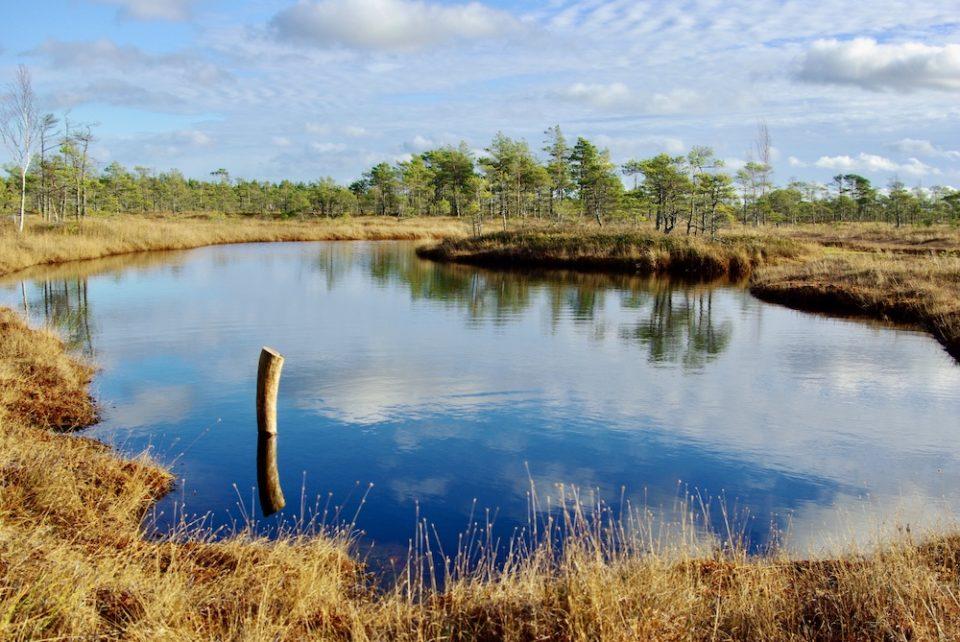 Dans le marais de Kemeri en Lettonie © Clara Delcroix
