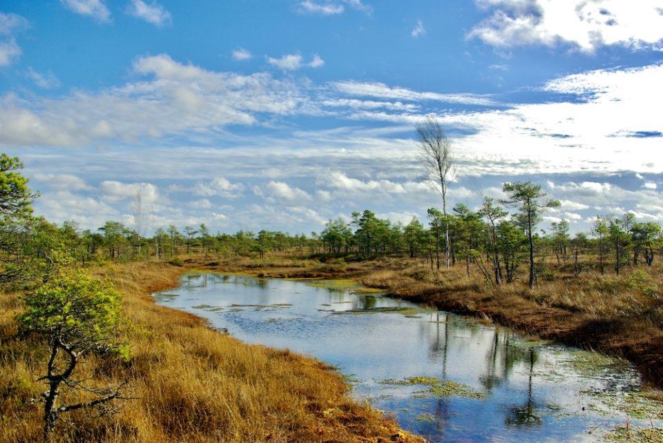 Une mare dans le marais de Kemeri en Lettonier © Clara Delcroix