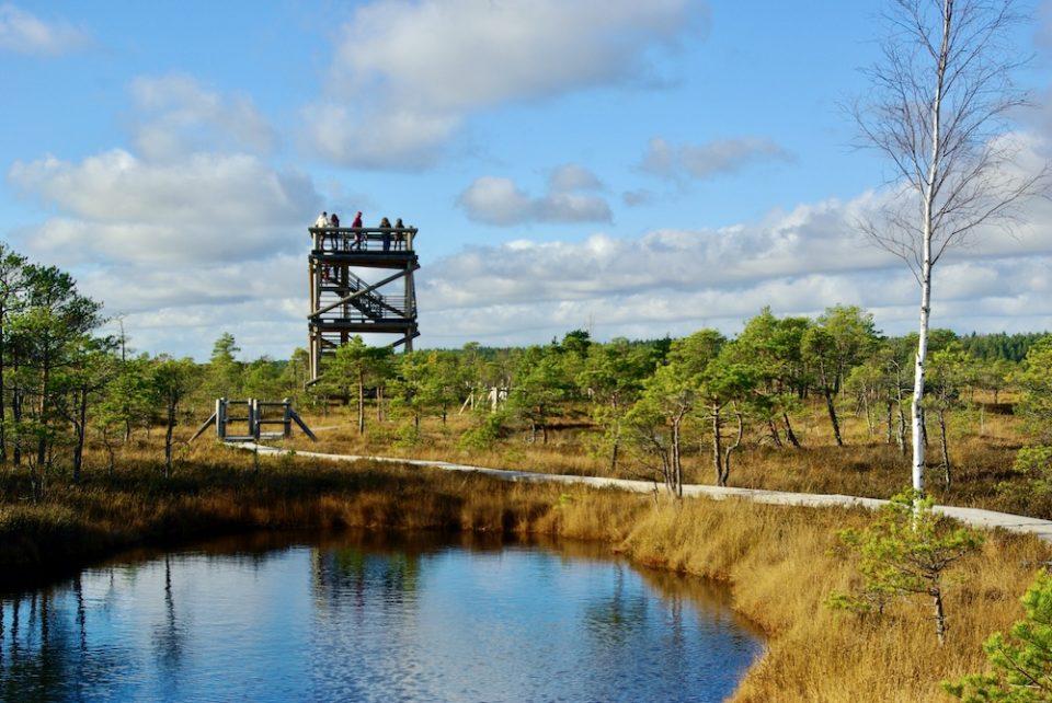 La tour d'observation du marais de Kemeri en Lettonie © Clara Delcroix