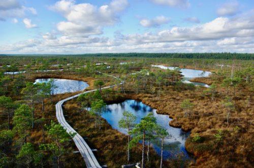 Article : À la découverte des marais en Lettonie, à proximité de Riga
